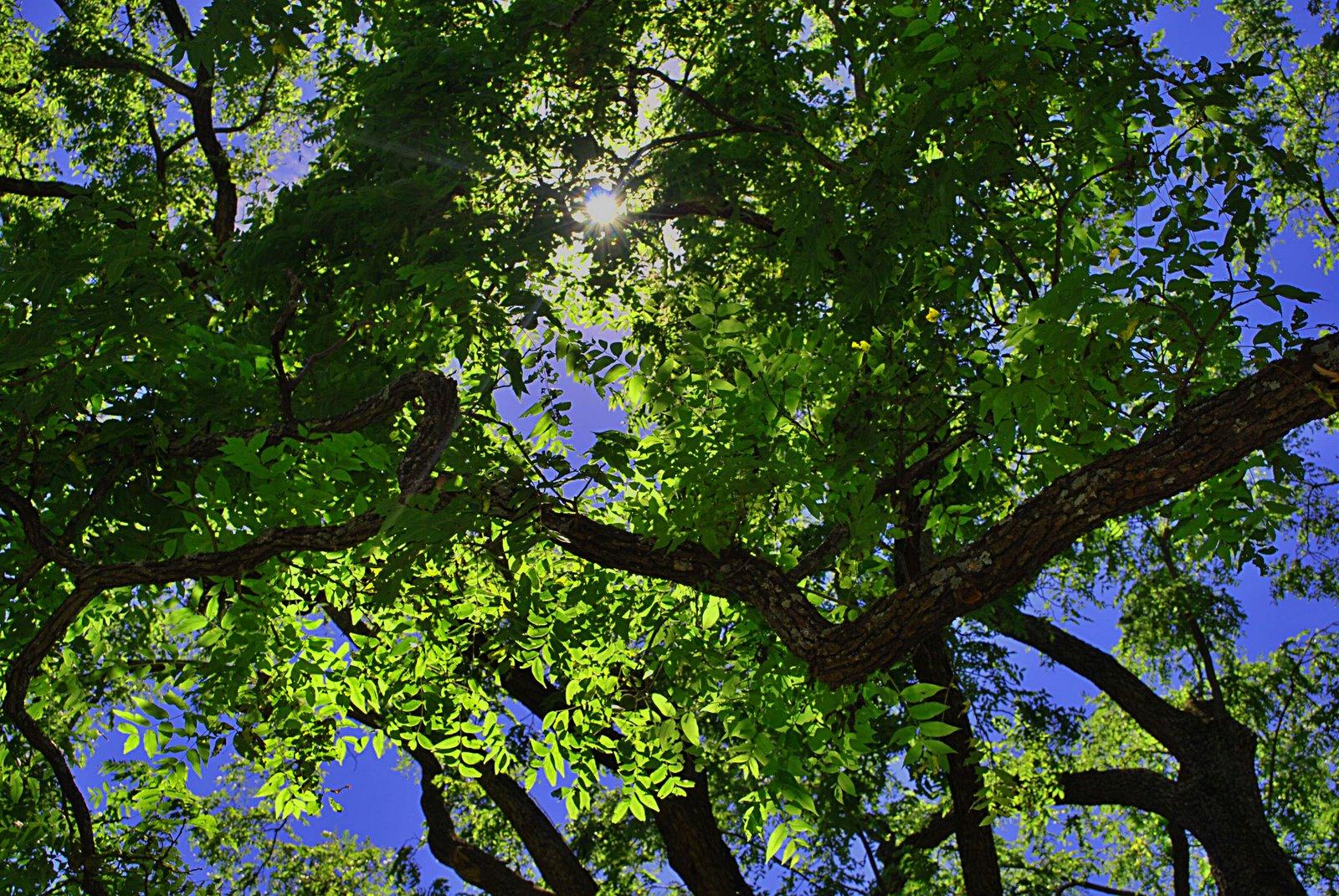 [trees9.24.08]