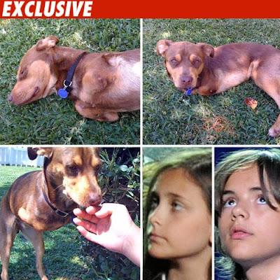 Jackson-Kids-raise-money-to-help-dog