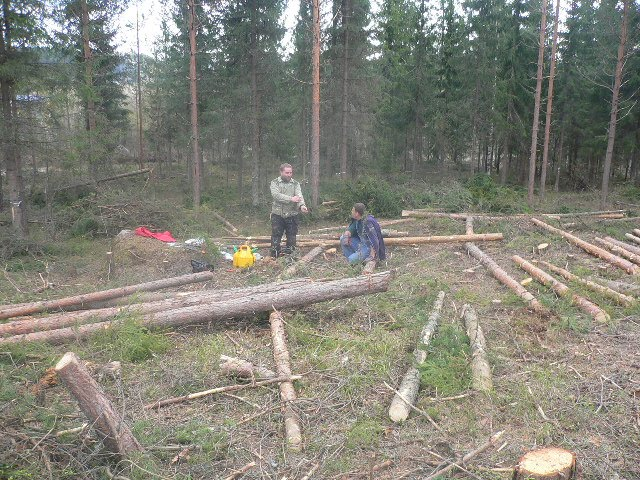 Puita kaadetaan / Träden fälls