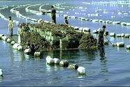 Un autre Regard sur la Pêche et l'Aquaculture