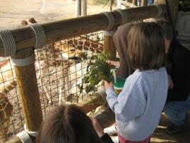 Kena (cousin) feeding the giraffes