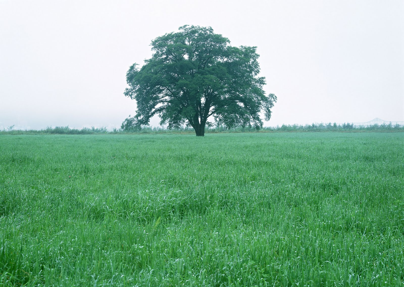 http://2.bp.blogspot.com/_rGZ14Dv3CBU/S92g_Dl63LI/AAAAAAAAA-4/cDKUwMOPHuM/s1600/Free+Tree+Wallpaper+%2842%29.JPG