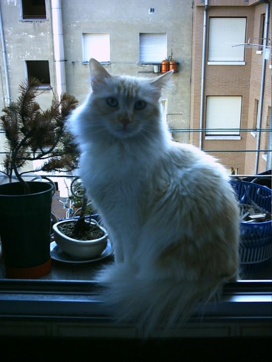mi gato Páris