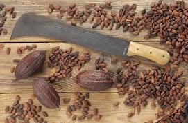 San Vicente de Chucuri - Capital cacaotera de Colombia