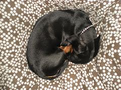 Taxen Irja är trött