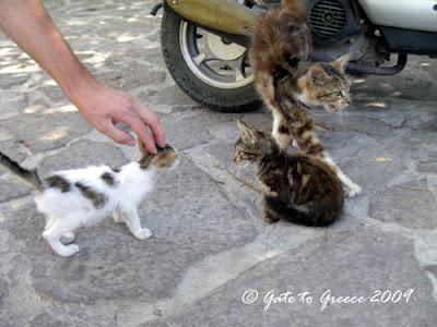 Cats in Petra