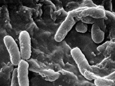 bacterias-medicina-investigacion-medica-salud.jpg