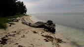 Belakang pantai Pulau Karya