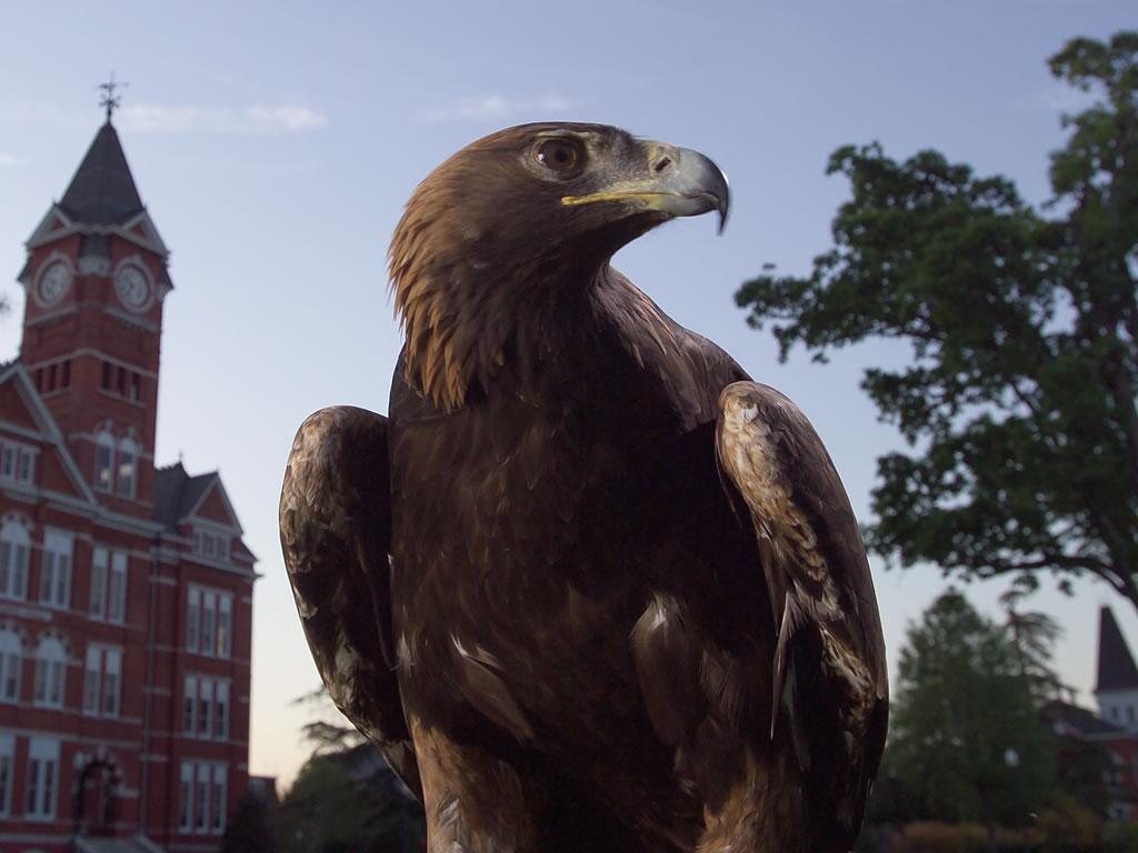 to my heart, WAR EAGLE!