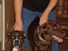Jesse & Mack ( Grand Dogs )