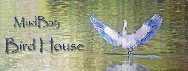 Mudbay BirdHouse