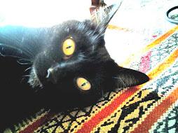 Occhi gialli