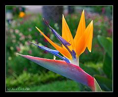 La flor del paraiso