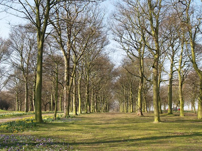 Trees Avenue Temple Newsam Leeds