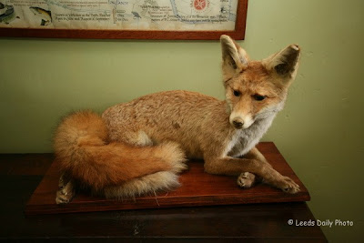 Mr Fox Arncliffe