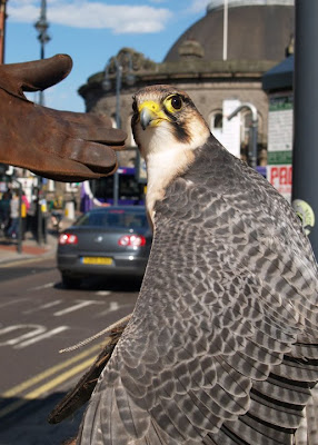 Falcon Leeds Royal Armouries
