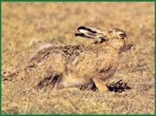 Especies de caza menor en Argentina