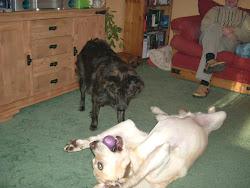 Maxie and Frankie