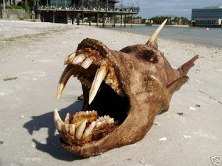 Below photos show the carcass of a very strange fish with monstrous