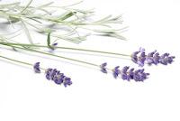 Minősített aromaterápiás illóolajok és készítmények