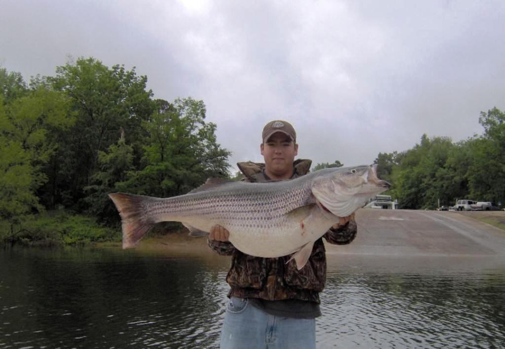 Tips on trolling speed for stripers fishing tackle stuff for Striped bass fishing tips