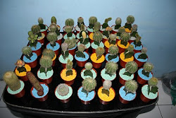 Kaktus Mini untuk Souvenir