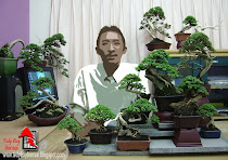 Happy Bonsai Greetings