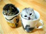 kitten in a coffe Cup