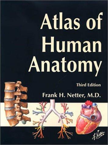 chiropractic, human anatomy