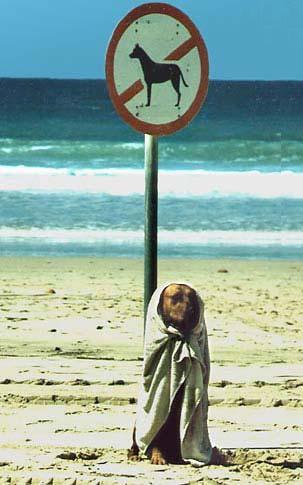 http://2.bp.blogspot.com/_rXBVRjPK6AE/TCs3UC8oOEI/AAAAAAAAAkg/LSKwJRm_NM0/s1600/dog+no+enter.jpg