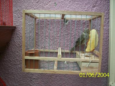 El canaricultor cria de jilguero en cautiverio for Cria de peces en cautiverio