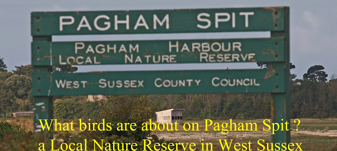 Pagham Birder: the blog
