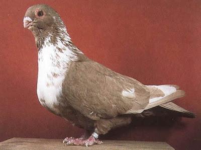 Mariola Pigeon
