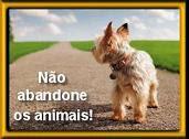 NÃO ABANDONE OS ANIMAIS