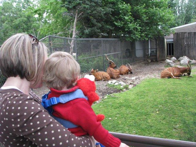 Halloween Louisville Zoo | Kaintuckeean No Destination Louisville Zoo