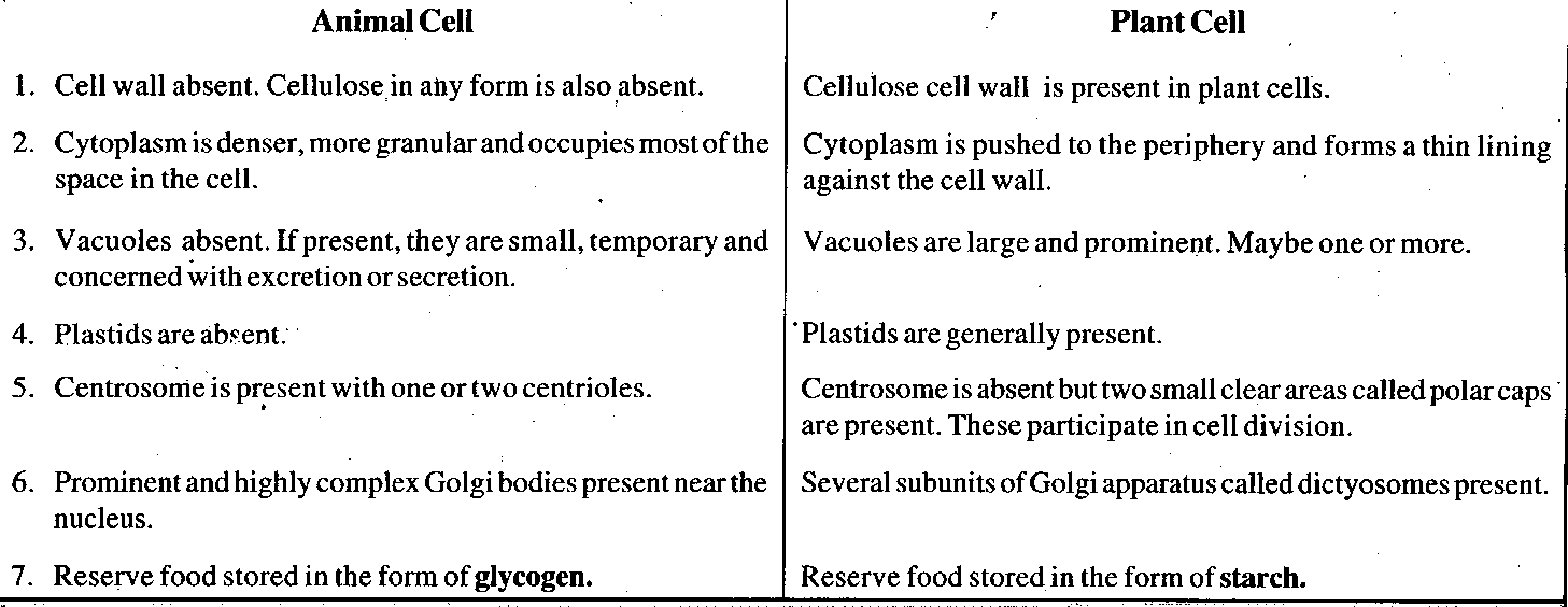 similarities and differences between plant cells and