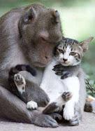 Animales Divertidos