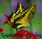 Metamorphosis Monday