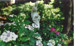 Hydrangeas & Rosalie