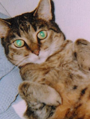 TIGGI, My Sweet Tabby... over the rainbow bridge now with Max and Allie