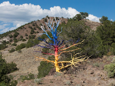 Missouri Mountain Run, Salida, Painted Tree