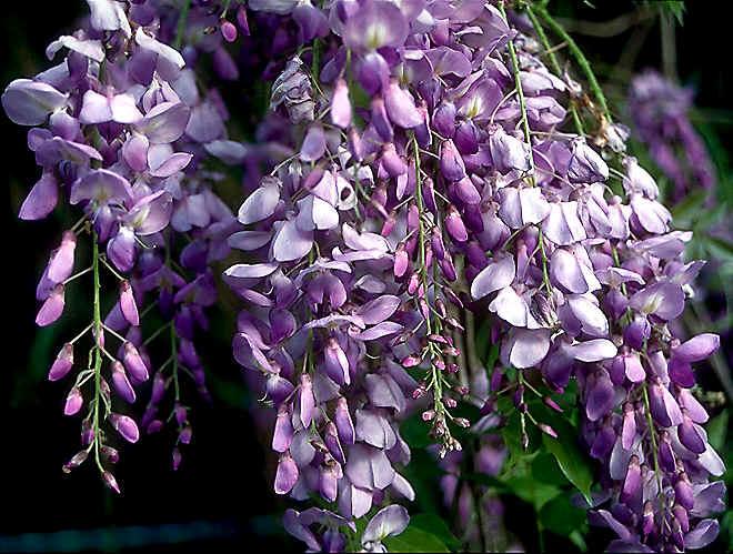 August Seasonal Flowers