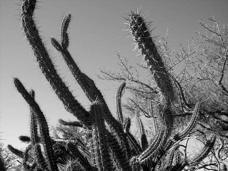 Baja Sur California