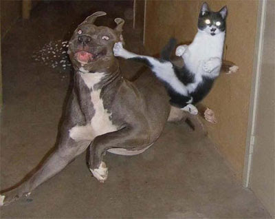 Artes Marciais Karate-kitty