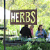 Free Herb Festival this Weekend