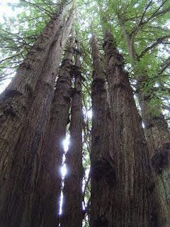 Trees of Mystery Klamath California