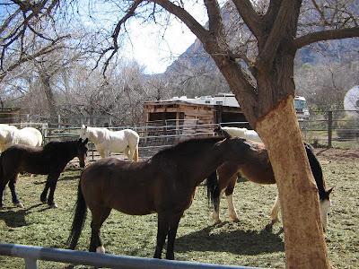 Bonnie Springs Ranch Old Nevada