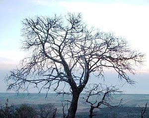Los árboles en invierno se invierten