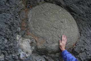 Photo by Chan Christiansen/Special to The Oregonian - Scientists think a fossilized tortoise found along the beach in Lincoln County may be 20 million years old. The domed back of the stone, which measures roughly 30 inches long by 24 inches wide, suggests it was a land turtle.