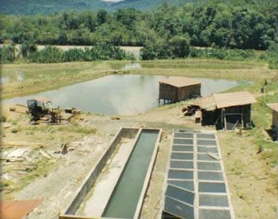 Perfil de exportaci n del camar n gigante de malasia for Fertilizacion de estanques piscicolas